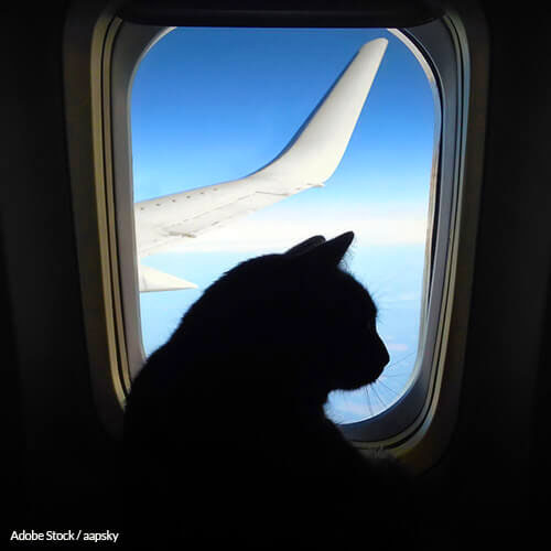 Airlines Must Adopt A Universal Pet Policy